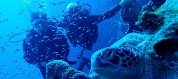 Auf Bunaken gibt es praktisch die Schildkrötengarantie