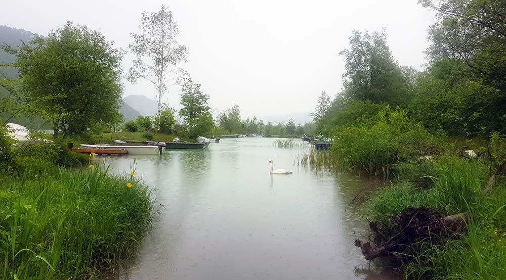 Fluss Drau mit Schwan und Booten