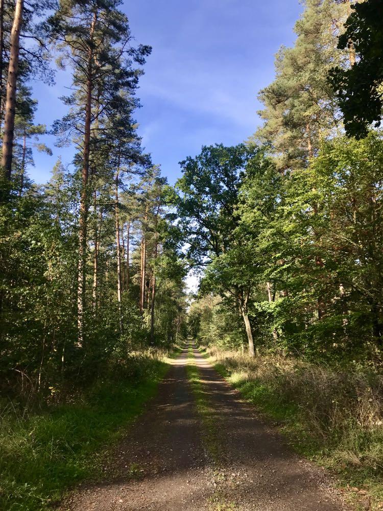 Waldweg Göhrde Wendland